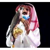 Сокіл сапсан був проданий в Саудівській Аравії за рекордну суму